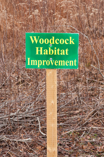 Woodcock Habitat Improvement