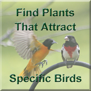 Find plants that attract certain birds