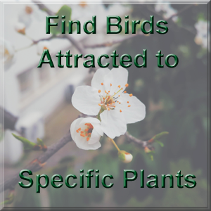 Find birds attracted to a plant